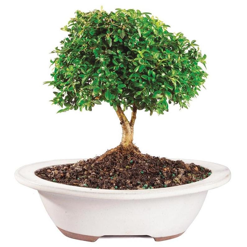 2x Mini yacht miniature fairy landscape garden terrarium bonsai decoration BC