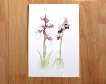 Botanical watercolor with wild orchids, butterfly orchid and spider orchid. Original, hand painted on paper 18 x 28 cm ( 7 x 11 inches )