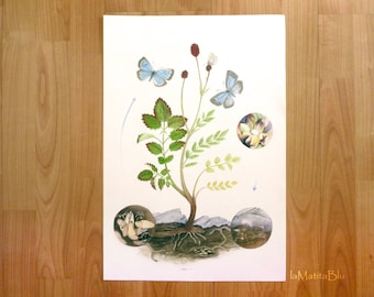 Butterfly Watercolor, hand made botanical illustration, original 33 x 48 cm, 13 x 18.8 inches