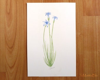 Original botanical painting of blue wild flower. Hand painted watercolor on paper, Size 16 x 24 cm - 6.3 x 9.4 inches