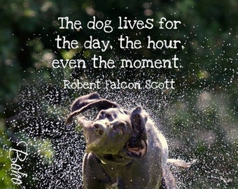Dog Quote Etsy