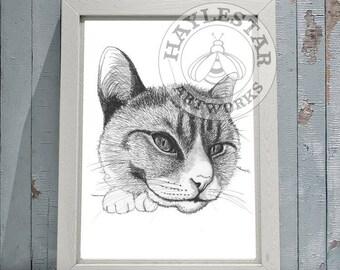 Cat Signed Original Print