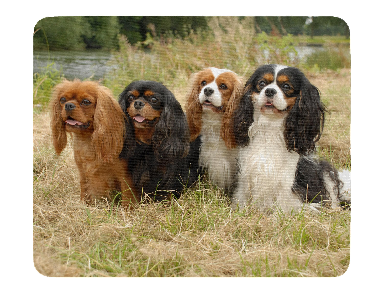 Home & Garden Home, Furniture & DIY King Charles Puppy Dog Fridge ...