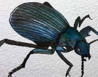 Original Watercolor Painting: Darkling Beetle Nature Painting