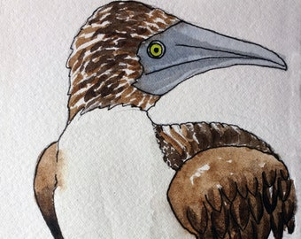 Original Watercolor Painting: Blue Footed Booby Nature Painting