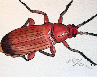 Original Watercolor Painting: Soldier Beetle Nature Painting