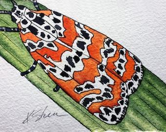 Original Watercolor Painting: Bella Moth Nature Painting