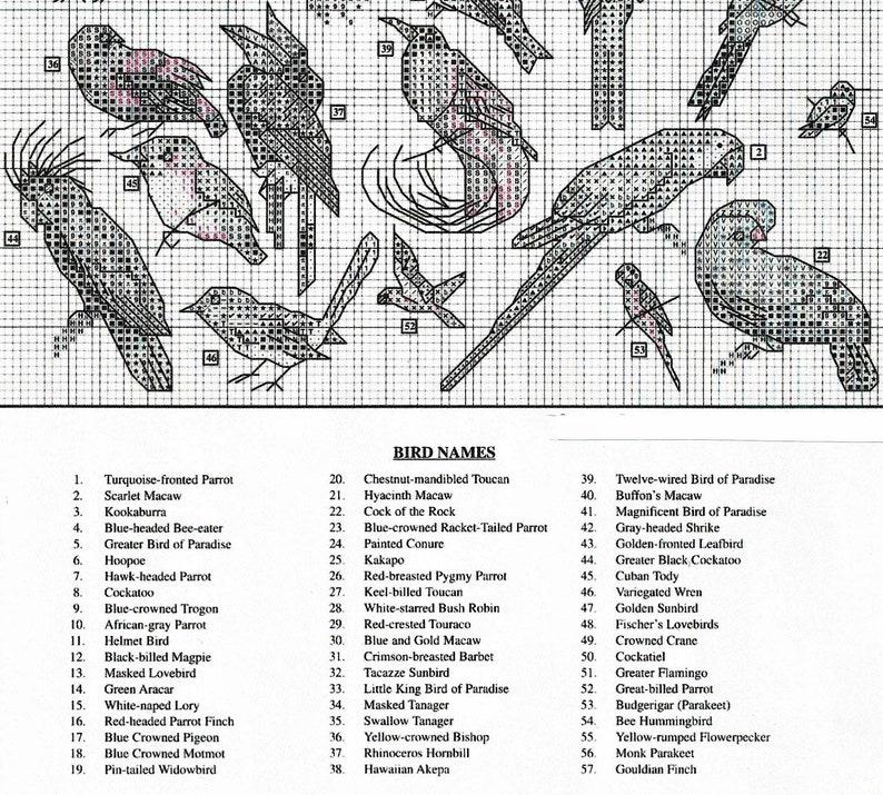 Vintage Cross Stitch Patterns Mini Exotic Birds Motifs PDF Instant Digital  Download Embroidery Rainforest Tropical Bird Designs 1-3