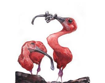 Scarlet Ibis Print
