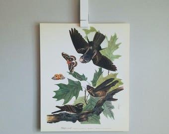 Whip-poor-will Audubon Print (1964)