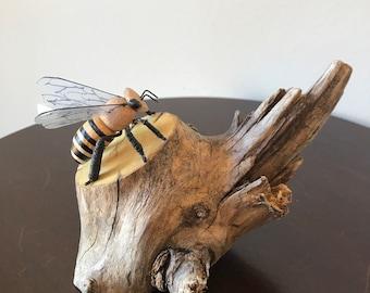 Solitary Bee on Yellowwood Driftwood Stump S-6