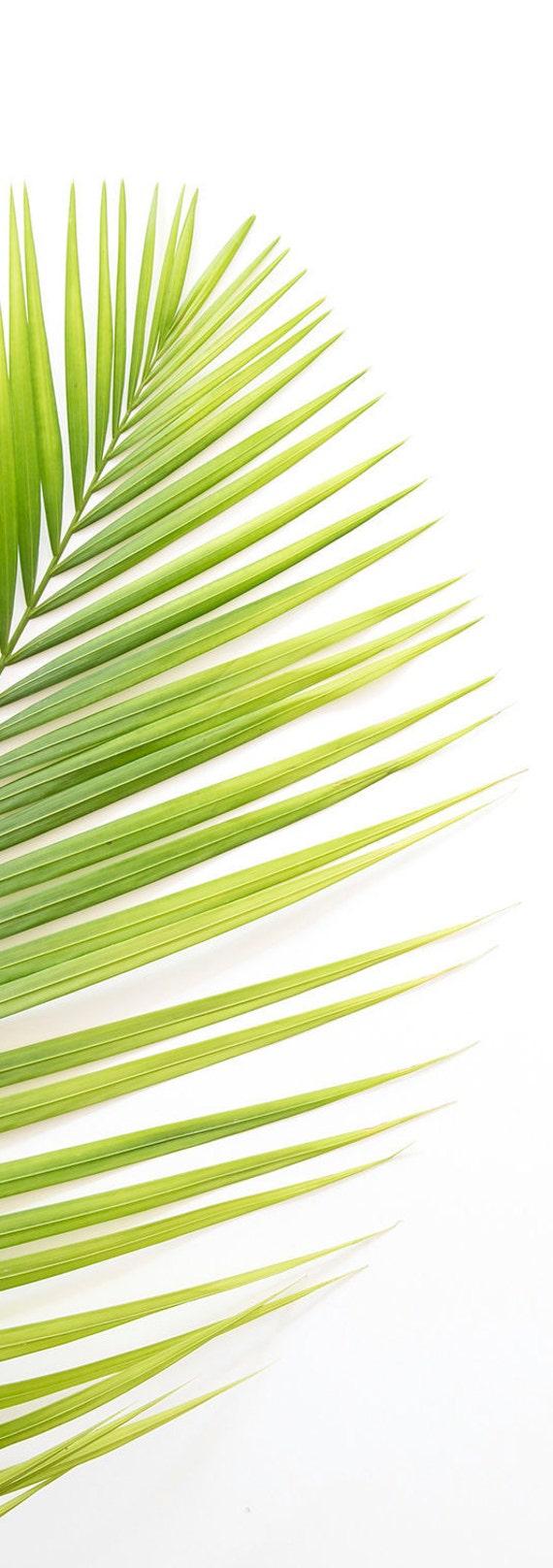 Palm Leaf Print Tropical Leaf Wall Art Minimalist Palm | Etsy
