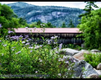 Purple Aster by the Bridge [Photography, Art, Decor, Mountains, Landscape, Nature, New England, Scenic, Gift, Home, Outdoors, River, Water]