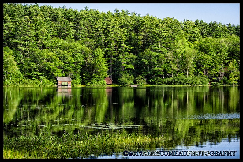 A Sea of Green  Forest Woods Water River Lakes Art New image 0