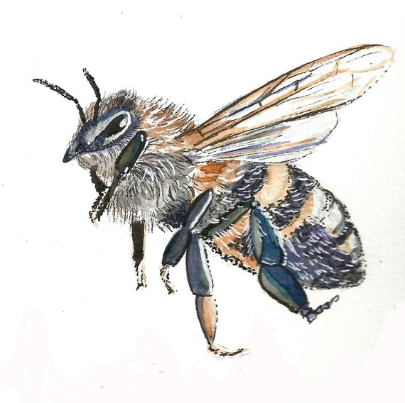 Watercolor and Ink Honey Bee