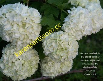 White Hydrangea with Bible verse