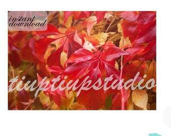 INSTANT DOWNLOAD   Original red leaves photography   Wall art