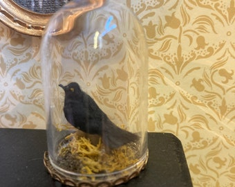 1/12 dolls house miniature crow in glass dome gothic witch wizard
