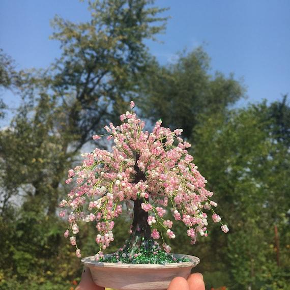 Cherry Blossom Bonsai Tree Sakura Bonsai Tree Etsy