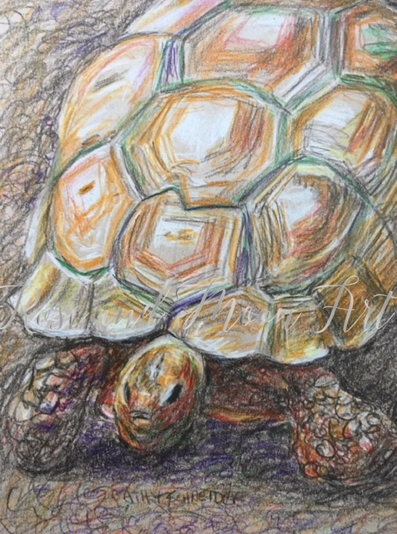 Original colored pencil drawing tortoise drawing