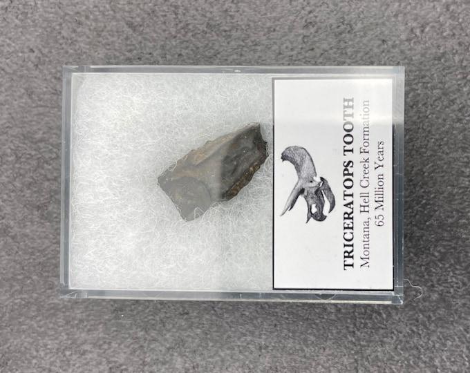 triceratops ring, necklace, men, fossil, jewelry, meteorite ring men, wedding band, black ceramic ring.
