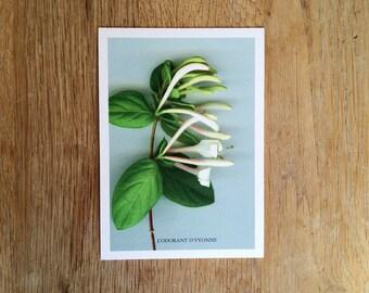"Map postcard ""The fragrant Yvonne"" flowers. Ref: FC - 2"