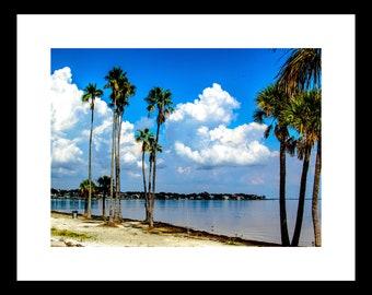 St. Petersburg FL, Beach, Palm Trees, Clouds