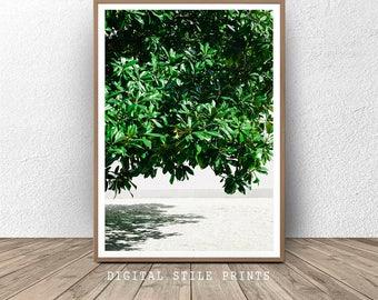 Tree Print, Coastal Tree Print, Home Decor, Wall Art, Green Tree, Photography, Coastal Print, Beach Tree Print, Printable Art, Beach Print