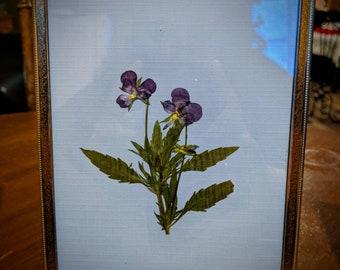 Framed Pressed Flower- Purple Pansy