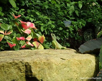 Lizard Yoga / Lizard Photography / Flower Photography / Nature Photography / Rock Photography / Kew Gardens