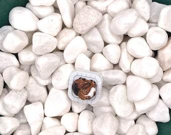 Big Eyed Puppy, Neodymium Magnet, Handmade Fridge Jewelry