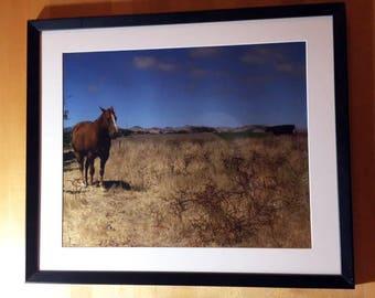 Red Pony , Salinas - 2007