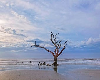Lone tree at dawn