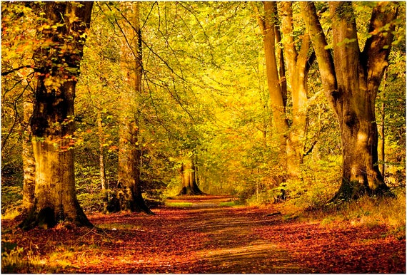 Path Through Autumn Woods Woodland Forest Trees Autumnal Etsy