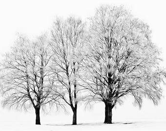 three bare winter trees trio simple minimalist monochrome black & white photographic wall fine art photography photograph print tree picture