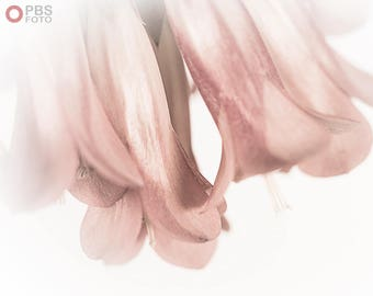 Art photography, nature photography, white and pink, decorative films, wild flower, white, soft