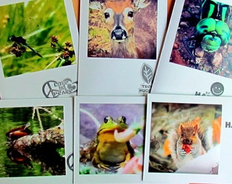 Wildlife Pen Pal Pack, Photo Note Cards, Pen Pal Kit, Cute Animal Cards, Note Cards for Kids, Stationery, Pen Pal Kit for Kids, Notecards