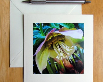 Lenten Rose Card, Flower Cards, Notecards, Hellebores, Photo Note Card, Spring Flower Cards, Blank Cards, Cards for Her, Mother's Day Cards