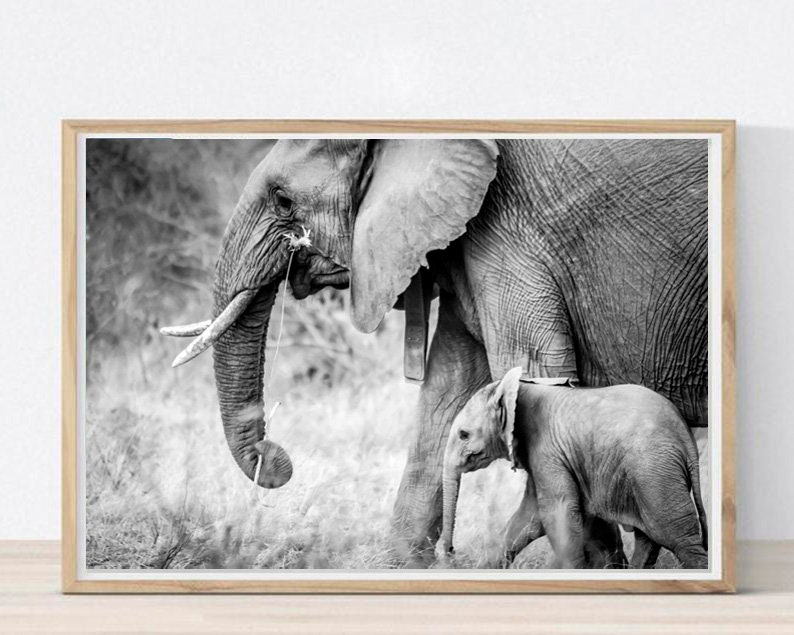 photograph about Printable Pictures of Elephants titled Elephants Printable Elephants Wall Artwork Black and White Artwork Elephant Poster Elephants Decor Elephant Images Boy or girl Elephant Print Obtain
