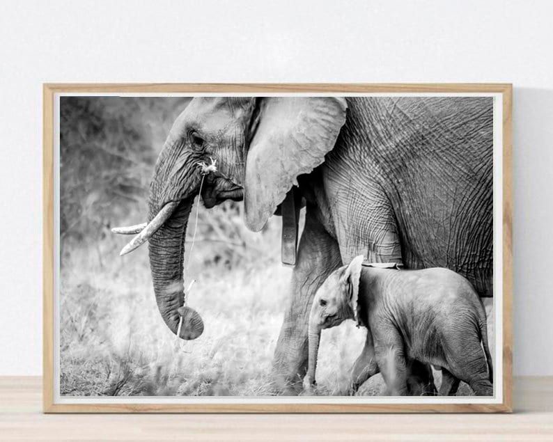 photograph relating to Printable Pictures of Elephants named Elephants Printable Elephants Wall Artwork Black and White Artwork Elephant Poster Elephants Decor Elephant Images Kid Elephant Print Down load