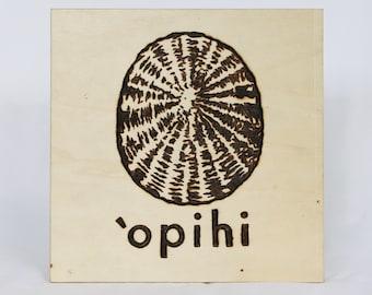 Opihi shell - woodburn