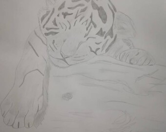 Sleepy Tiger Cub Pencil Drawing
