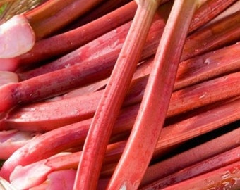 Organic Strawberry Rhubarb Seeds -  Thick pink petioles, medium to heavy seed stalk production