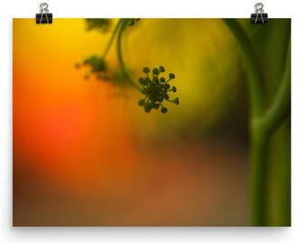 dill print   fresh herb photography   wall art