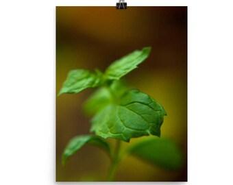 mint print   fresh herb photography   wall decor
