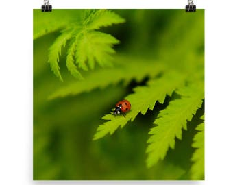 green leaves print | ladybug photo | wall art | nature photography