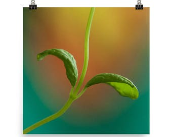 mint herb print   fresh herb photography