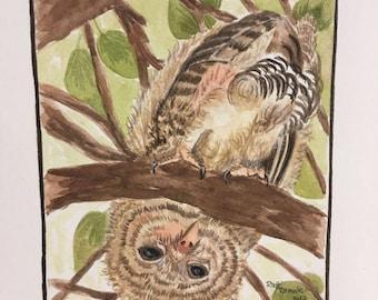 Upsidedown Owl, Original watercolor painting