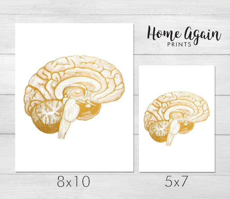 Nursing Student Anatomy Poster Human Brain Anatomy Neuroscience Art Foil Print Set of 2 Medical Student Gift Doctors Office Decor
