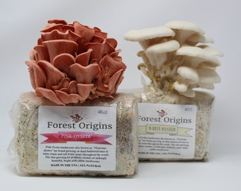 Pink and White Oyster Mushroom Grow Kit by Forest Origins, Beginner Mushroom Growing Kit, Top Gardening Gift, Holiday Gift, Unique Gift